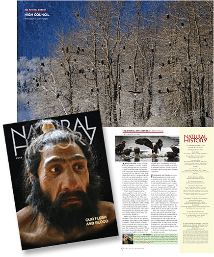November 2013 Natural History magazine