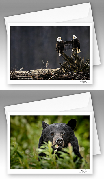 Nature note cards - Dengler Images