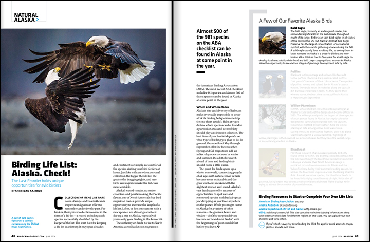 Tearsheet from June 2014 issue of Alaska magazine of bald eagles fighting on the Chilkat River near Haines, Alaska