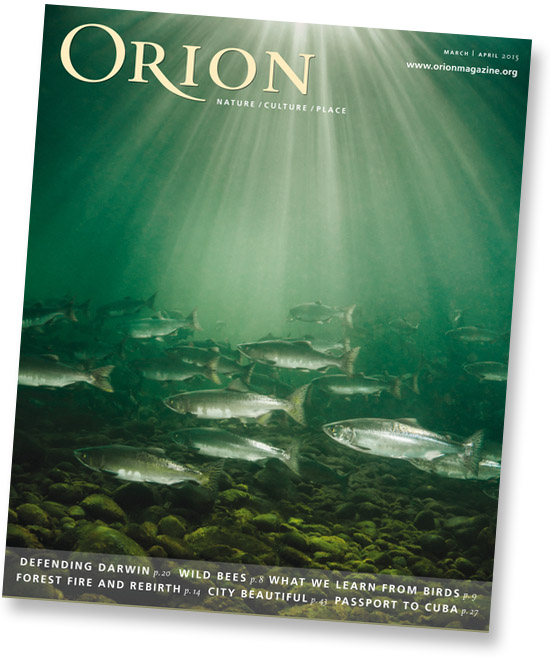 Orion magazine cover