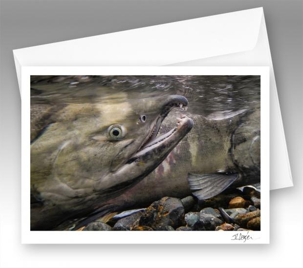 Chum salmon note card