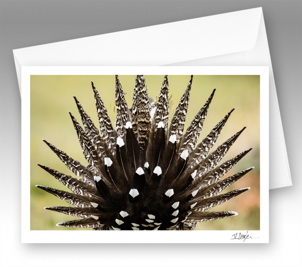 Greater sage-grouse note card