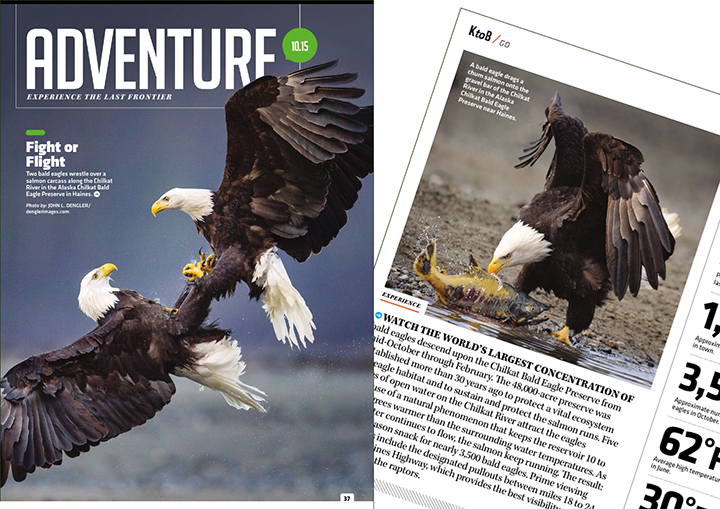 AK magazine Oct. 2015 tearsheets of bald eagles on the Chilkat River